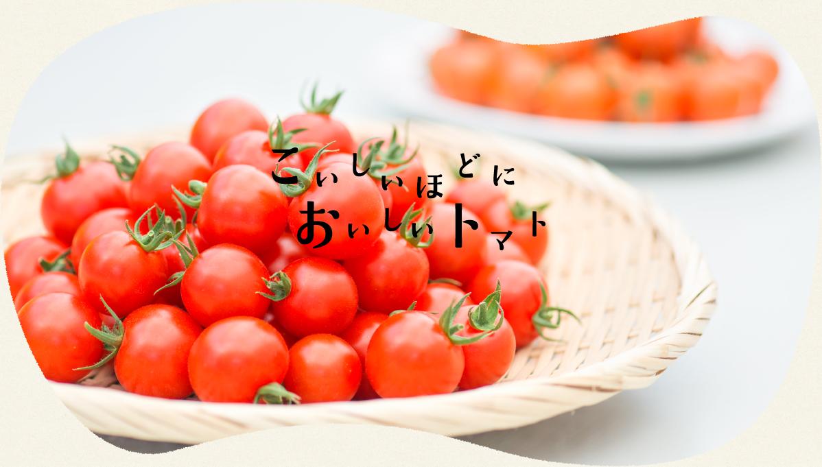 こいしいほどにおいしいトマト